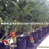 greenhouse pertanian sayuran